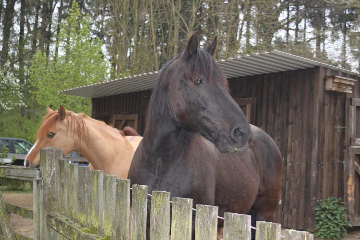 Ausflug-Pferde_002