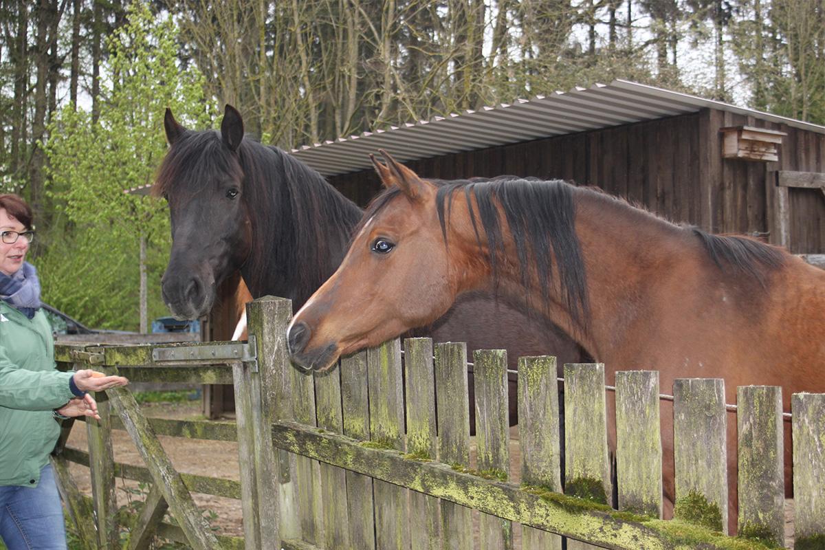 Ausflug-Pferde_004