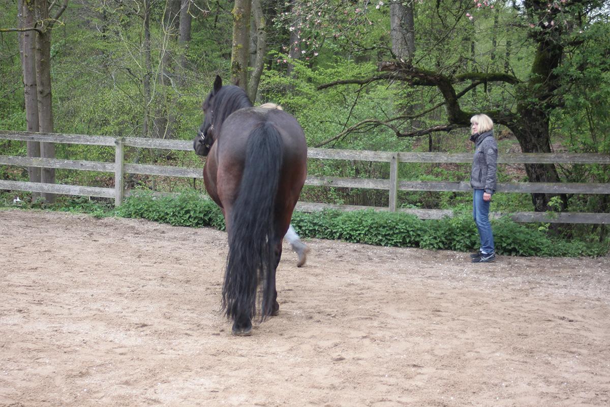 Ausflug-Pferde_009