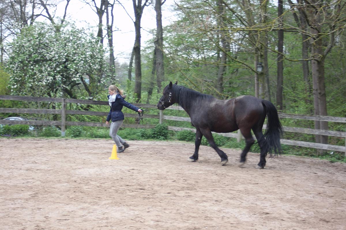 Ausflug-Pferde_010