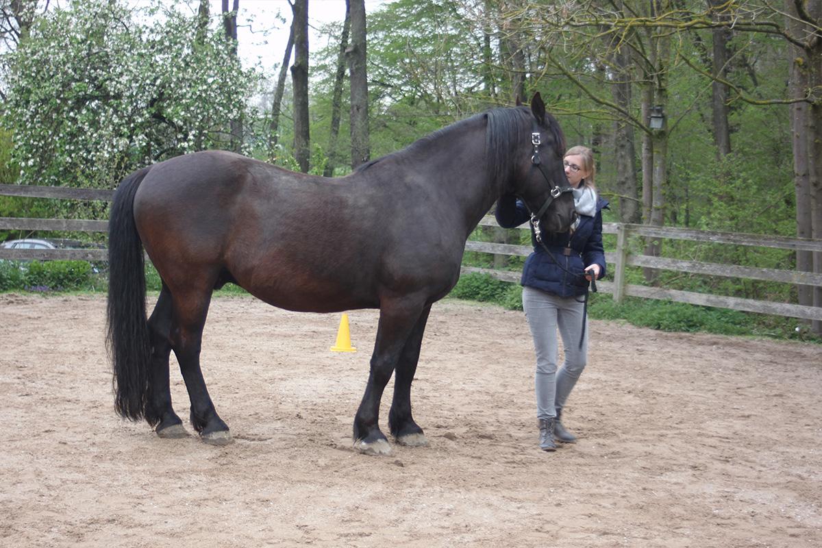Ausflug-Pferde_011