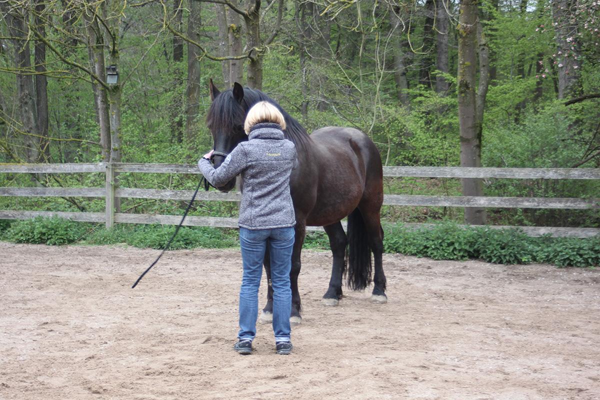 Ausflug-Pferde_012