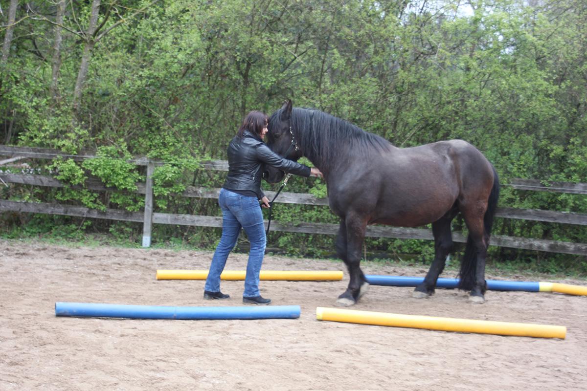 Ausflug-Pferde_013
