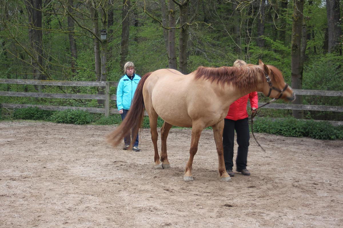 Ausflug-Pferde_016