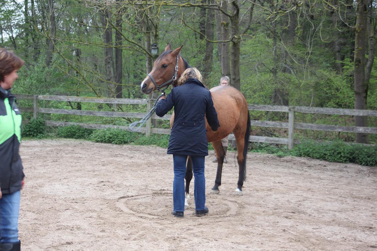 Ausflug-Pferde_018