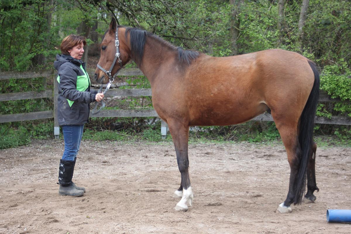 Ausflug-Pferde_019