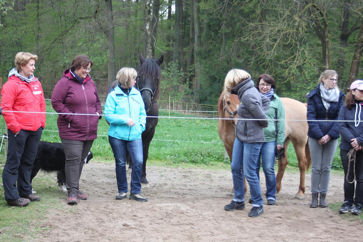 Ausflug-Pferde_020
