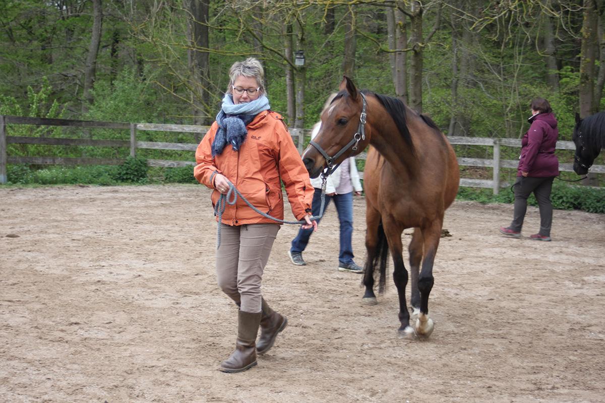 Ausflug-Pferde_021