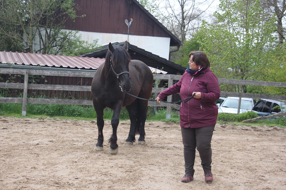 Ausflug-Pferde_022