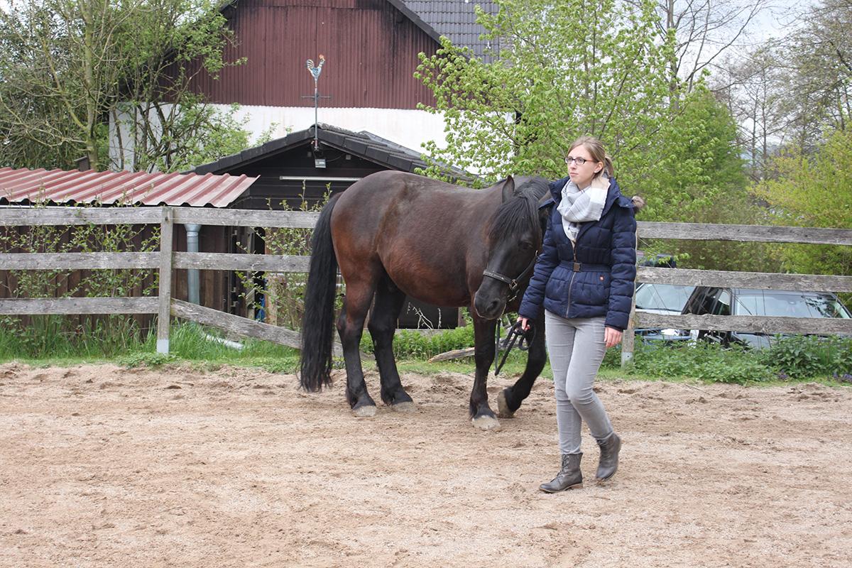 Ausflug-Pferde_024
