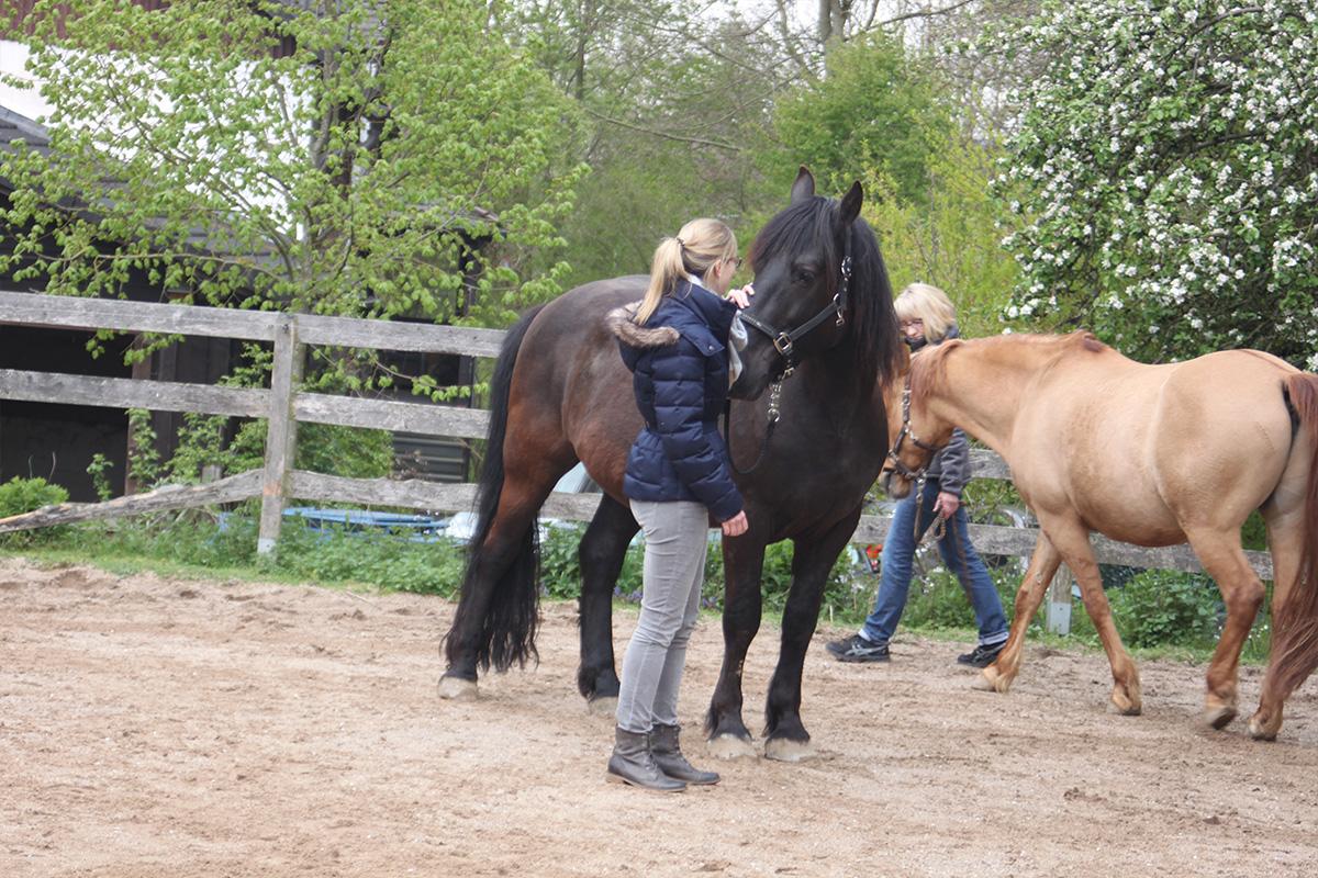 Ausflug-Pferde_027