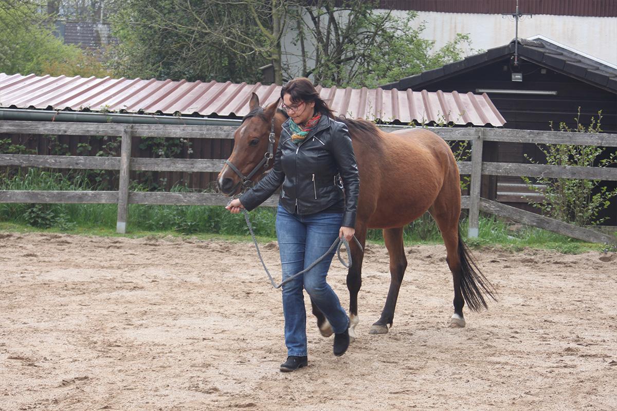 Ausflug-Pferde_029