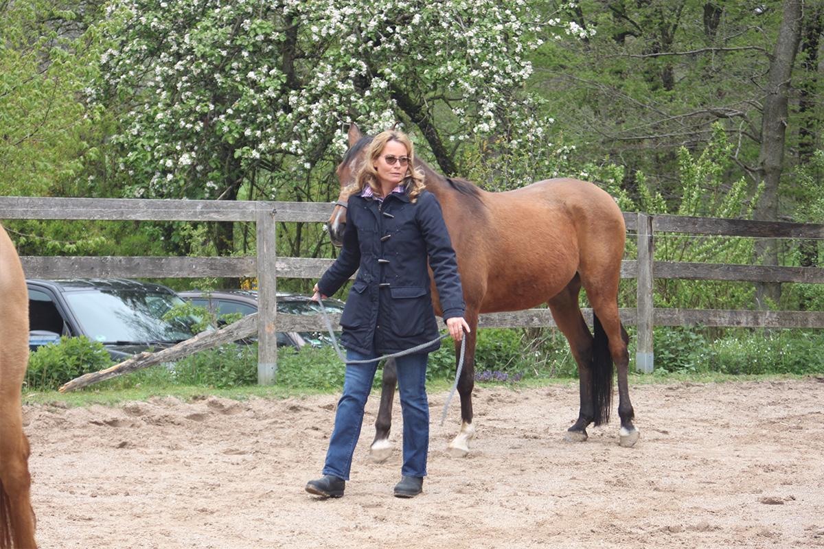 Ausflug-Pferde_031