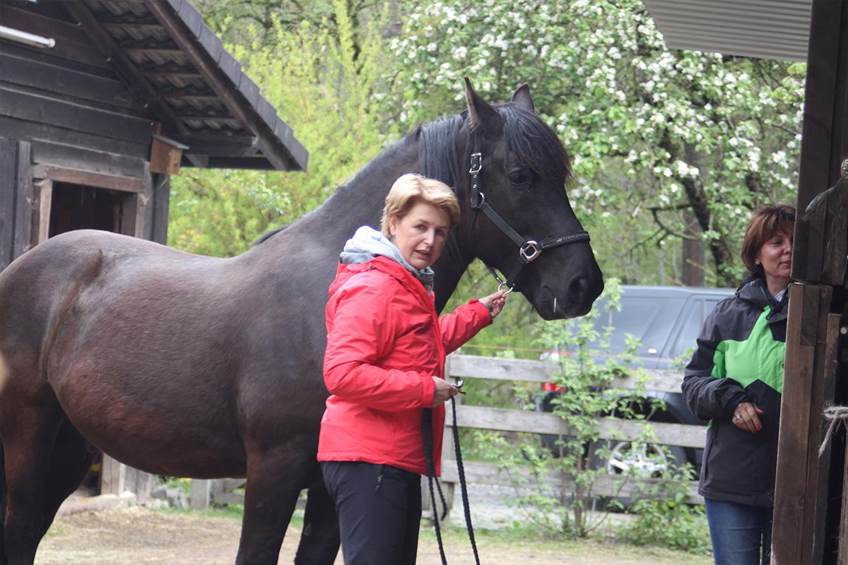 Ausflug-Pferde_032